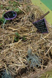 semis sous couvert