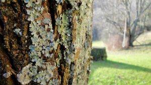arbre flou