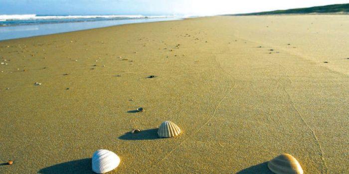 Sur-la-plage-abandonnee
